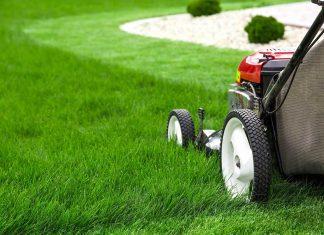 Ditta manutenzione giardini Roma